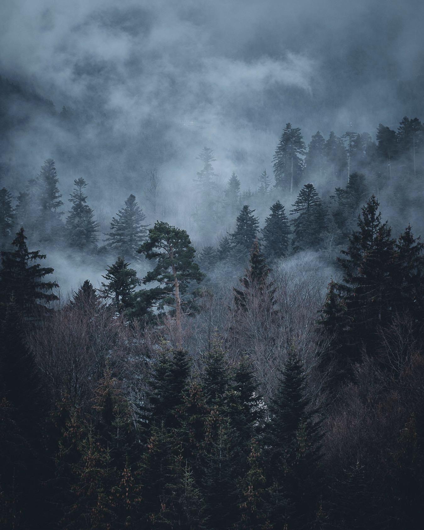 Black Forest Oc 1350x1080 Amitav554 Https Ift Tt 2vrmtkx February 29 2020 At 07 45pmon Reddit Com R Earthpor In 2020 Landscape Landscape Photography Nature Pictures