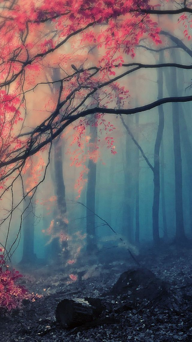 Scenery Pink Forest Iphone Wallpaper Wallpaper Iphone