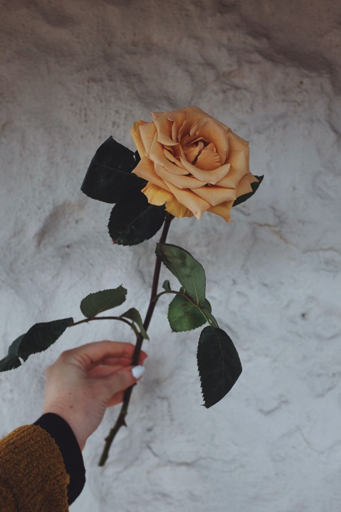 toffee coloured rose, I mean it really doesn't get much