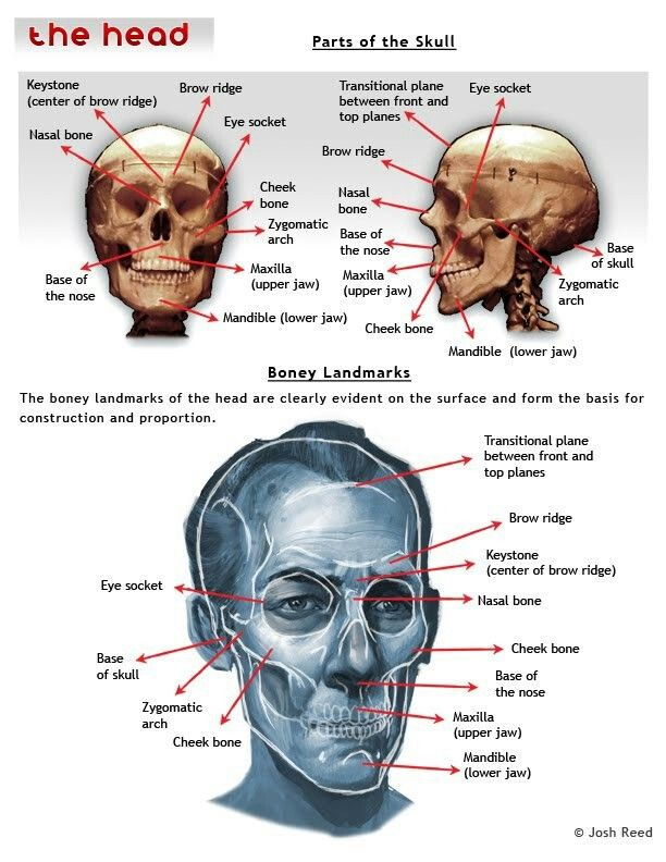 Fine Eye Socket Anatomy Gallery - Anatomy Ideas - yunoki.info