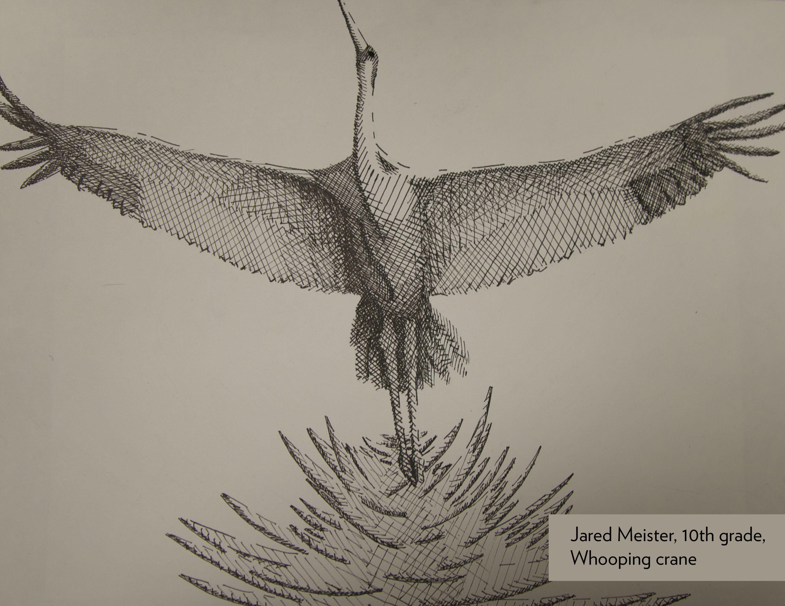 Art Contest Semifinalist Grades 9 12 Whooping Crane