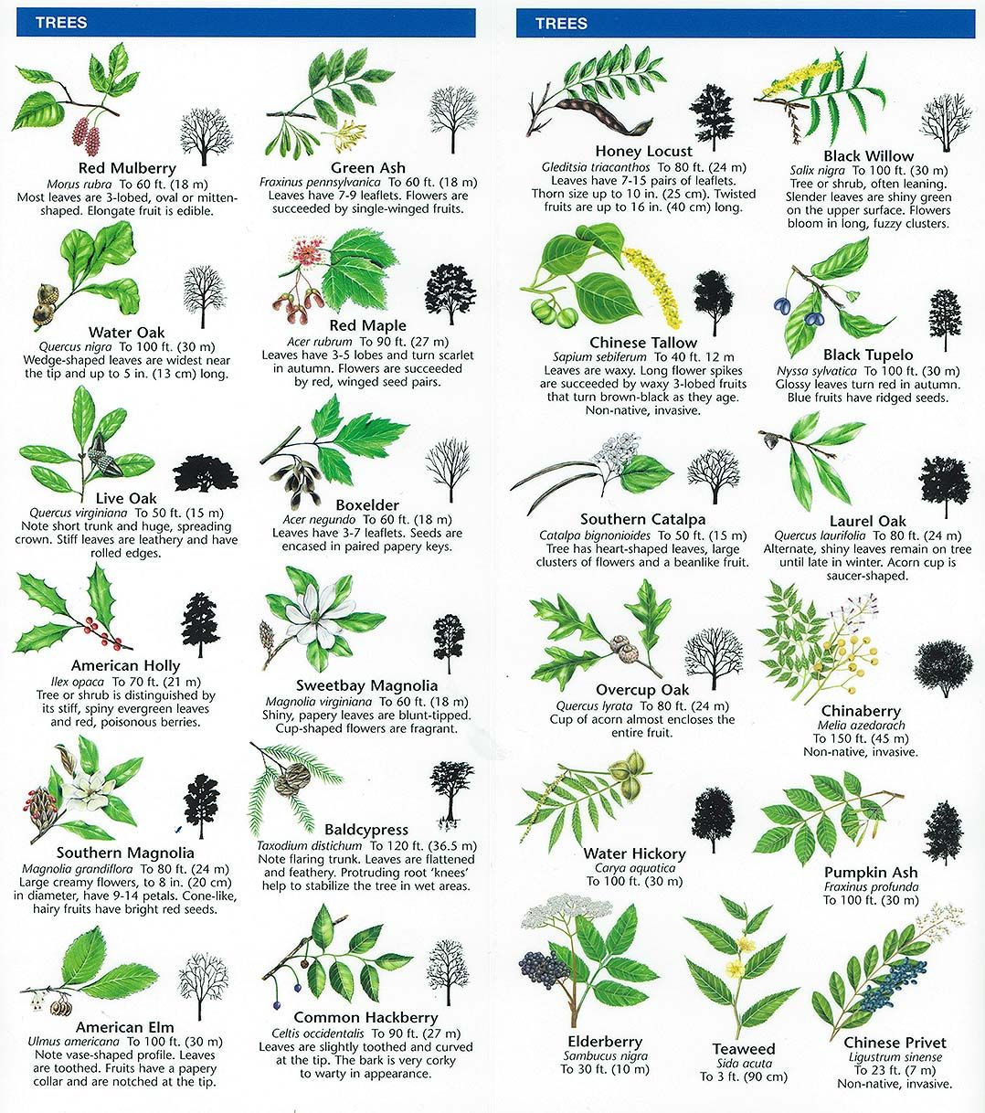 Species Identification – Woodlands Conservancy | Preschool ...