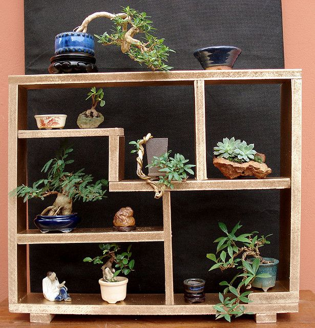 Estante bonsai ideas pinterest bonsai gardens and for Plant shelf plans