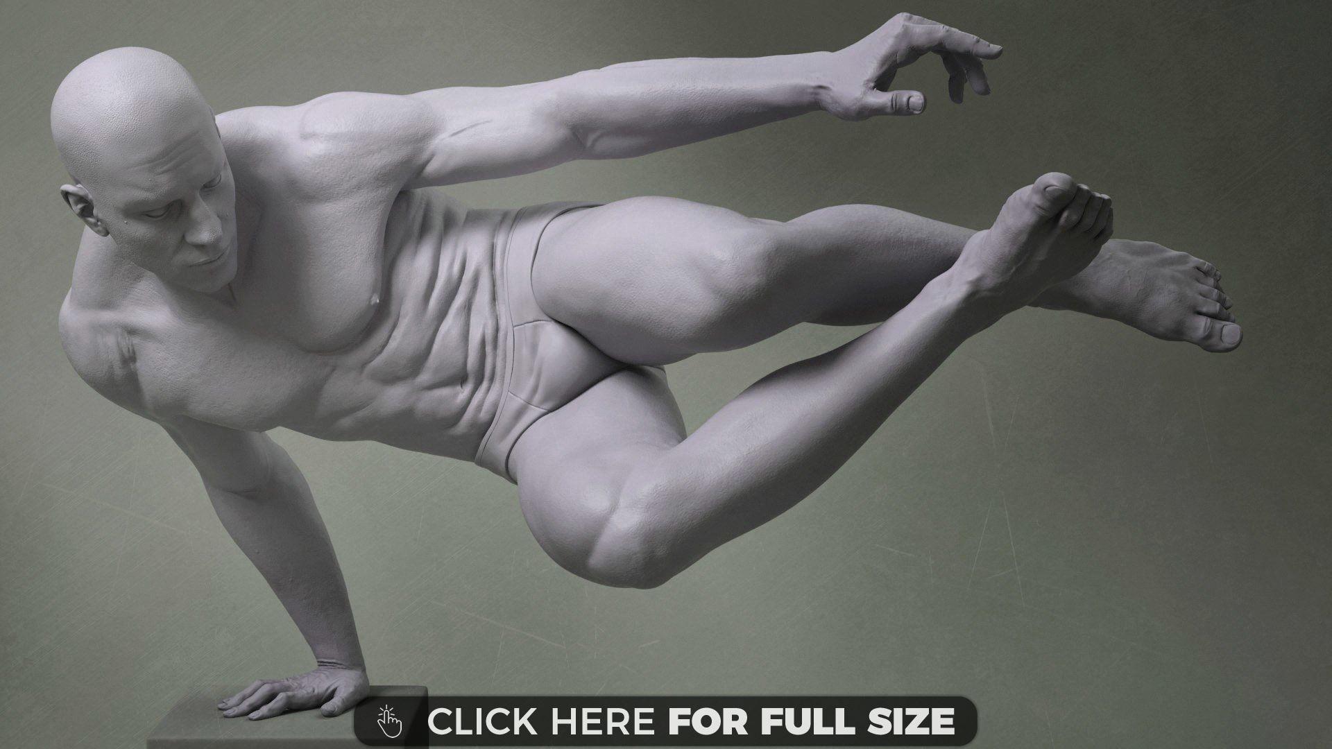 Anatomy Study | Desktop Wallpapers | Pinterest