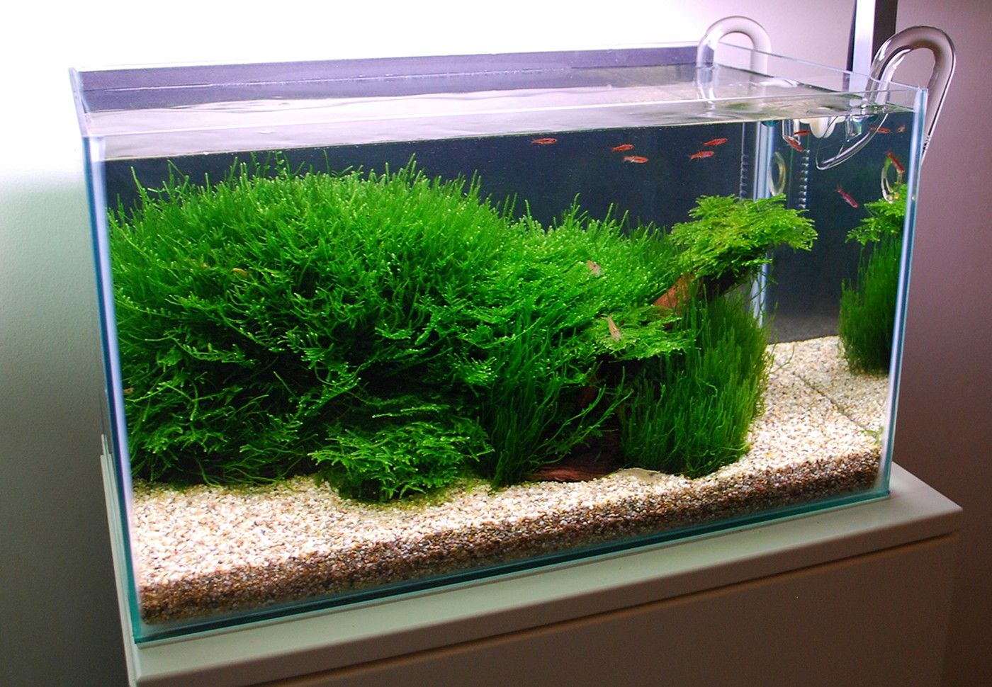 Mosses only mosses layout 104 james starr marshall for Planted tank fish
