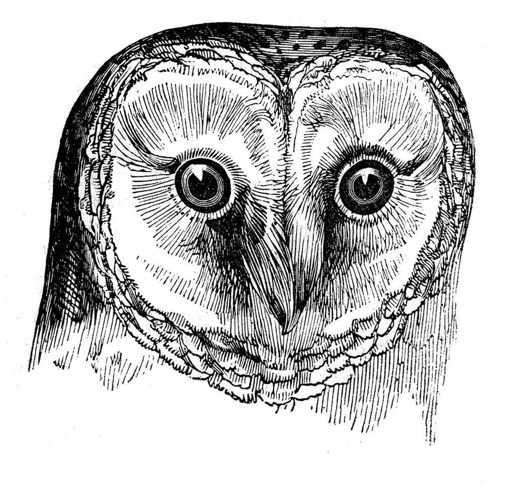 RRV Owl & Pumpkin Tattoo | Rowdy Roddy Vintage | Halloween & Fancy ...