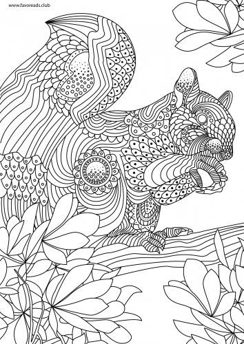 Squirrel Printable Adult Coloring Page   Pinteres