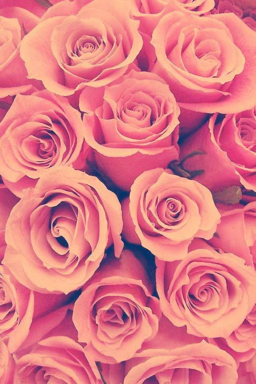 Roses Background With Images Pink Flowers Flowers Pink Roses