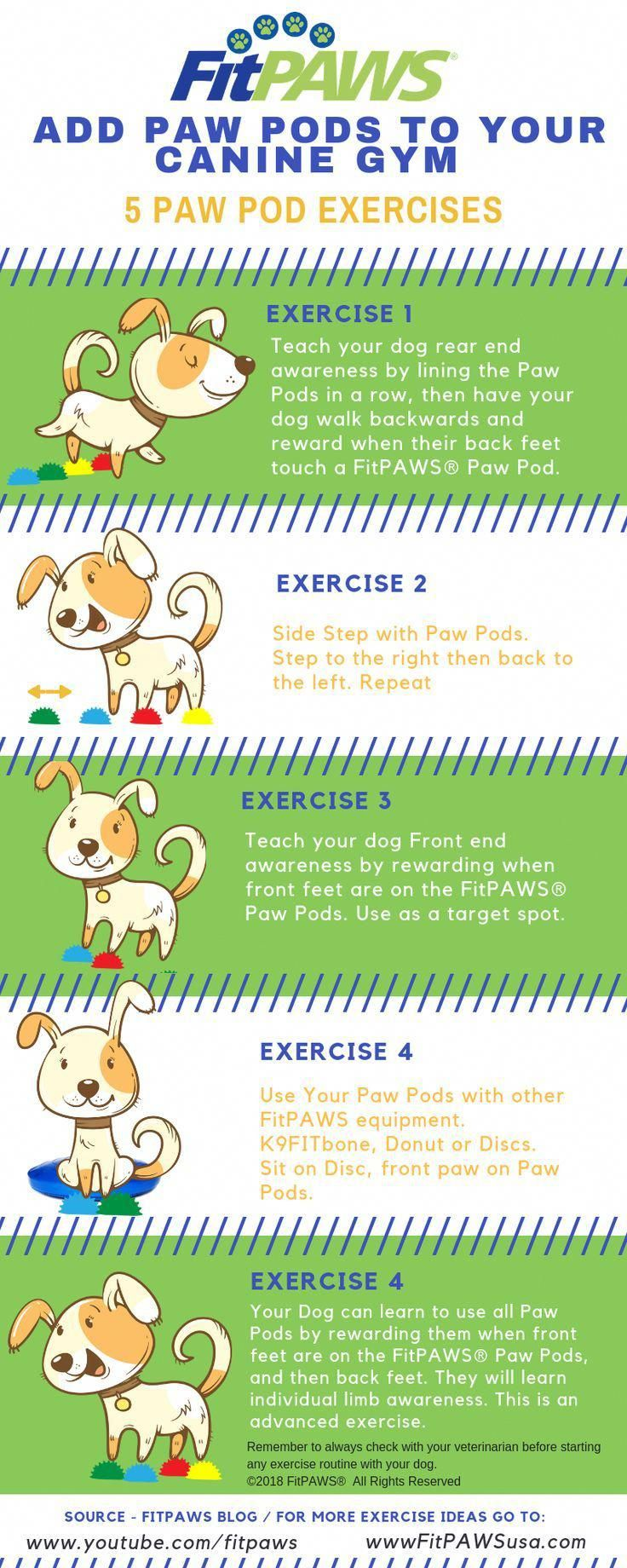 Gusty Leather Dog Collar Dogsofbali Dogtraininghumor In 2020 Agility Training For Dogs Dog Exercise Dog Care Tips