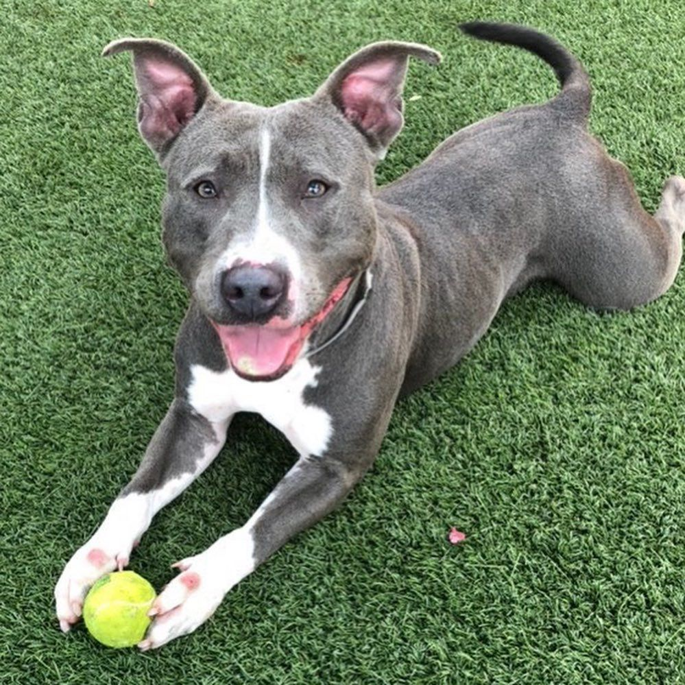 """Urgent Dogs of Miami on Instagram """"Needs an adopter"""
