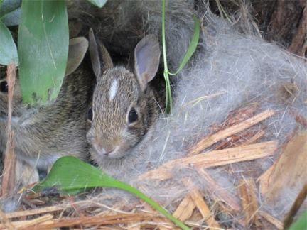 Baby Bunnies in Kim K's backyard 10 | Baby bunnies, Cutie ...