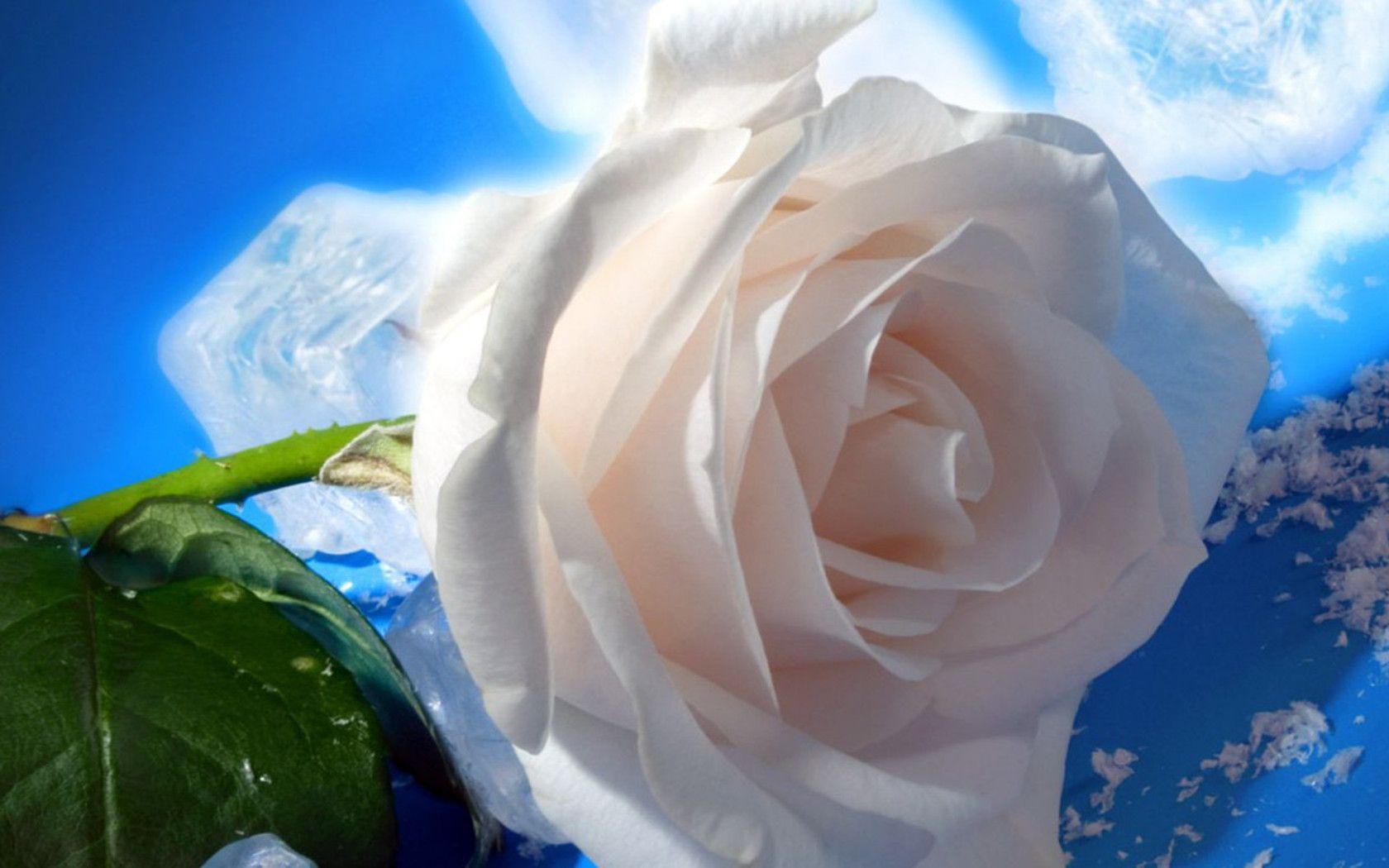 Image http fond d ecran for Fond ecran rose