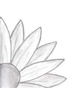Daisy Drawing On Pinterest