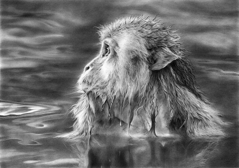 Artodyssey peter williams grayscale art wildlife