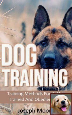 Effective Ways For Puppy Behavior Training Puppy Behavior
