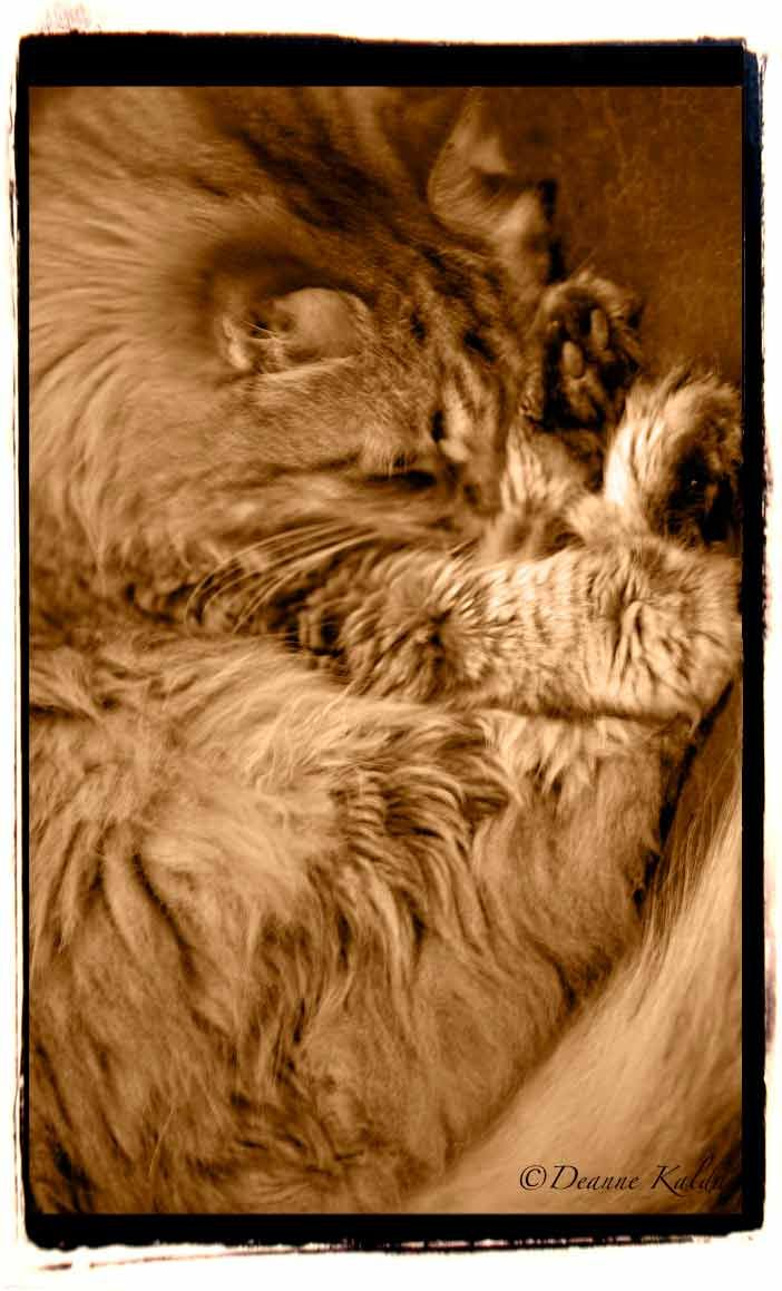 sasha sleeping http://wp.me/p1vBLf-wZ