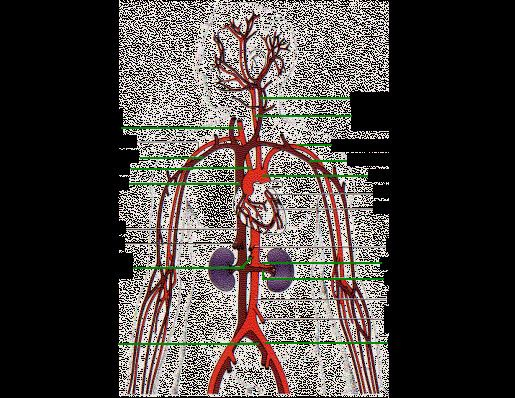 25 Human Veins and Arteries Diagram | Markcritz Template ...