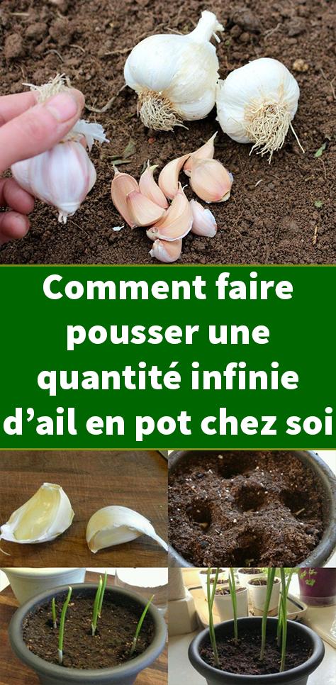 Comment Faire Pousser Une Quantite Infinie D Ail En Pot Chez Soi Jardinage Cultiver Plante