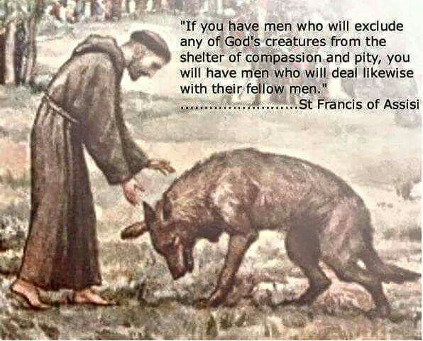 Finally Pope Francis Believes Compassion For Animals Can: Religious Or Not It's A Good Point. #govegan