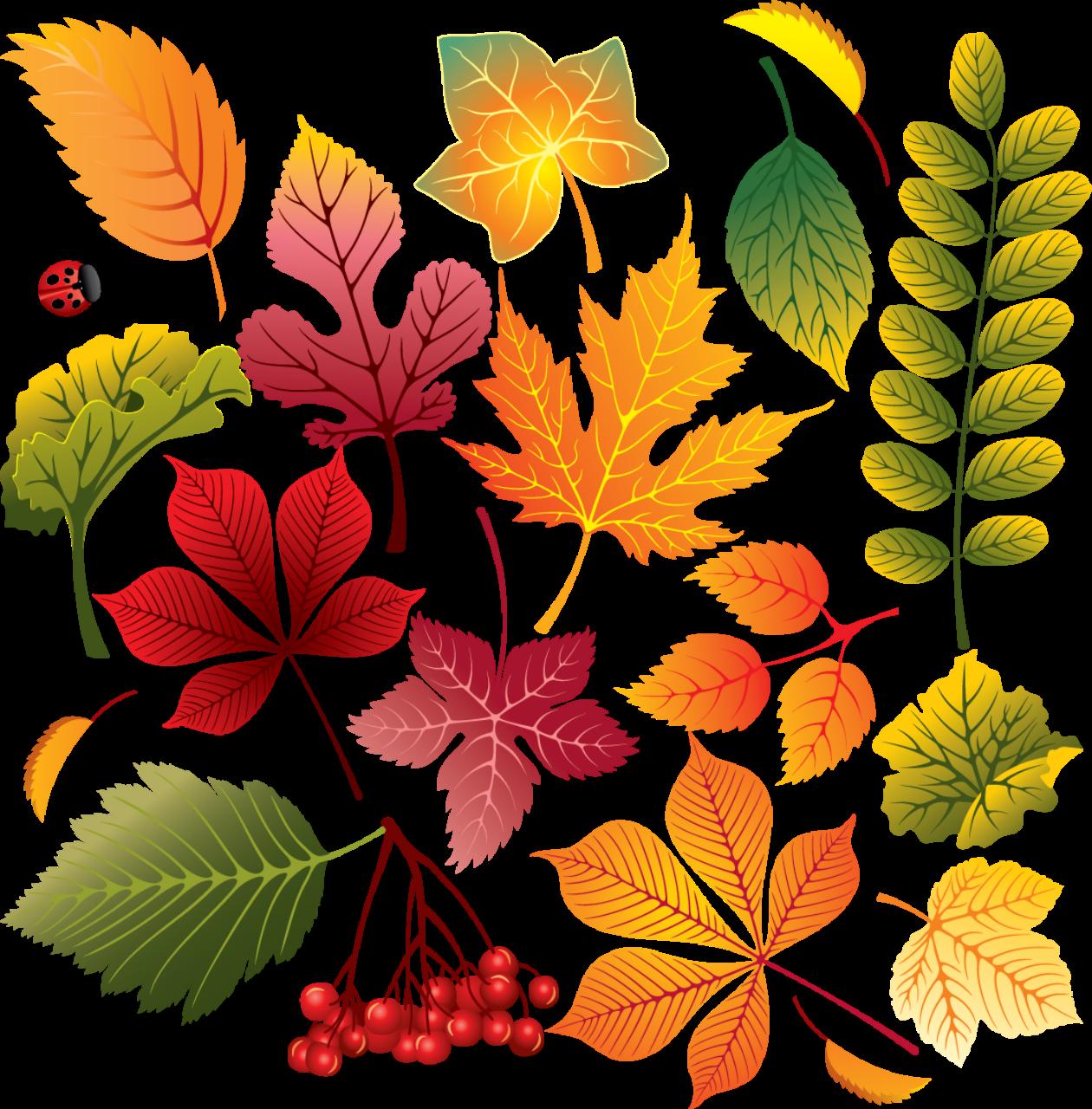 Картинки осень листья для детей, федор винкс