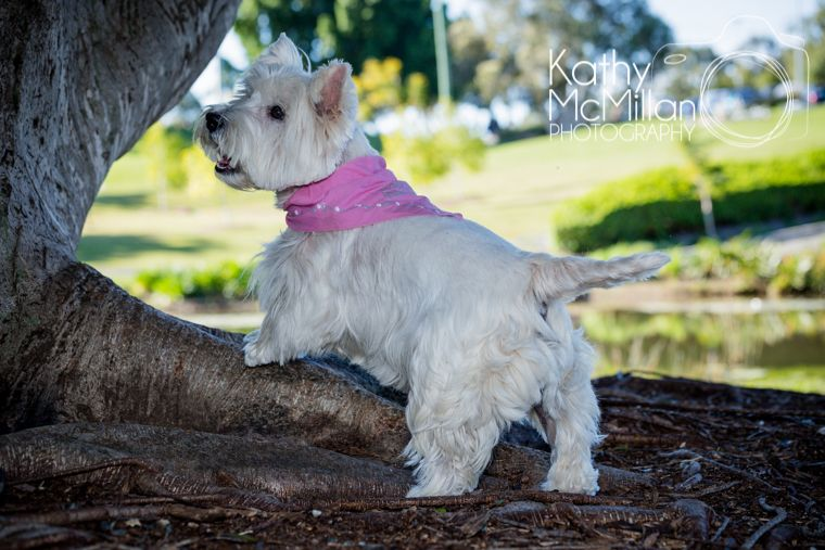 Miss Shilo pet photo shoot at Underwood Park / Brisbane