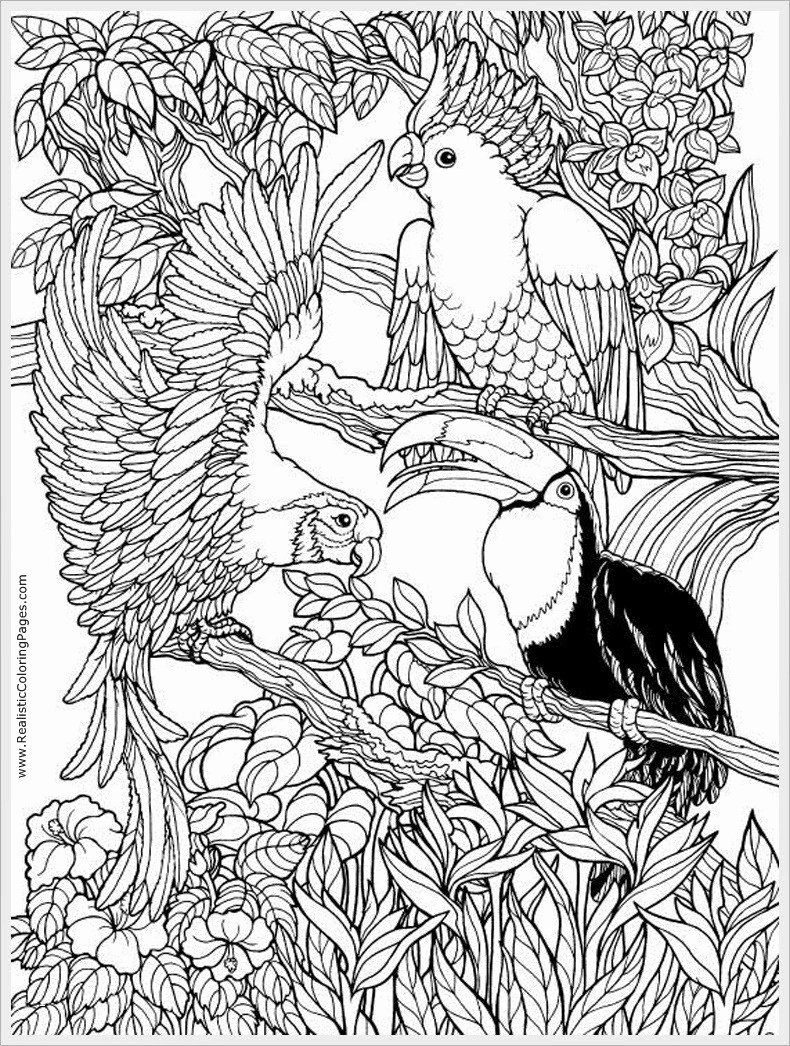 Alabama State Bird Coloring Page In 2020 Bird Coloring Pages