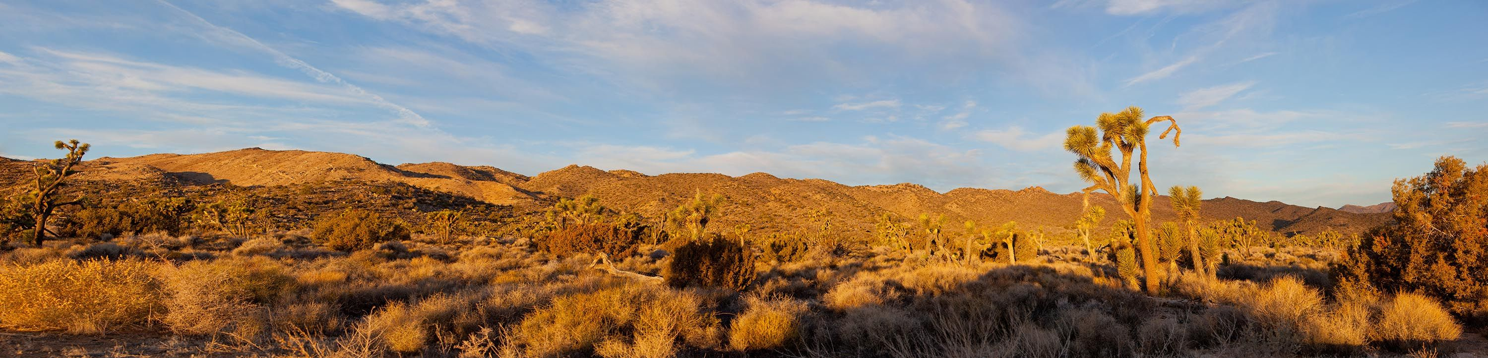 A stitched Panorama of Sunrise, looking west, in Joshua Tree National Park