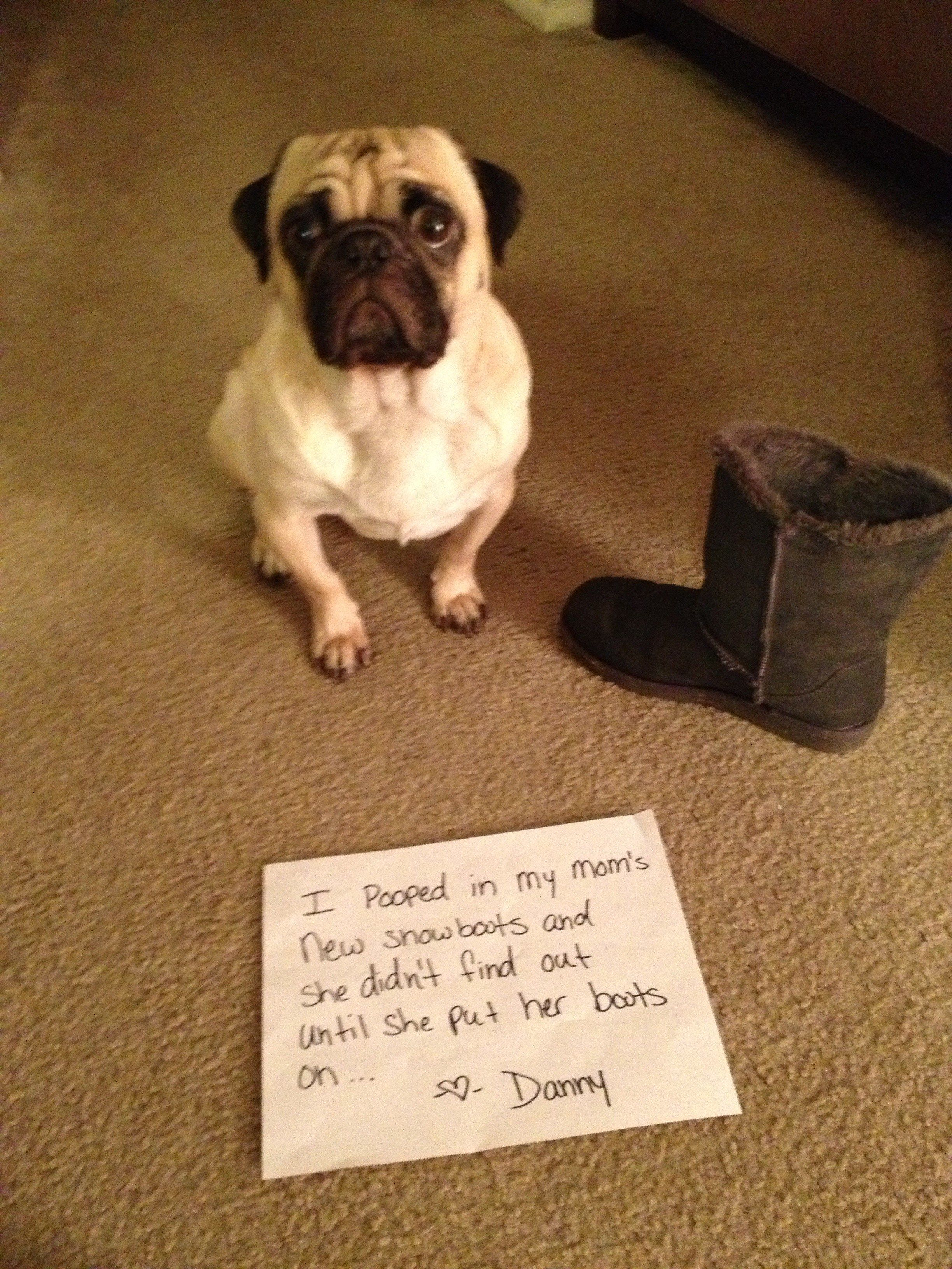 Pooped In Your Boots I Have Cute Funny Dogs Pugs Funny