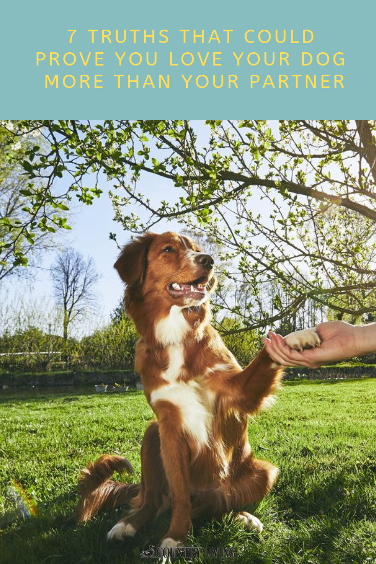 7 Truths That Could Prove You Love Your Dog More Than Your Partner Cat Illnesses Dogs Animal Medicine