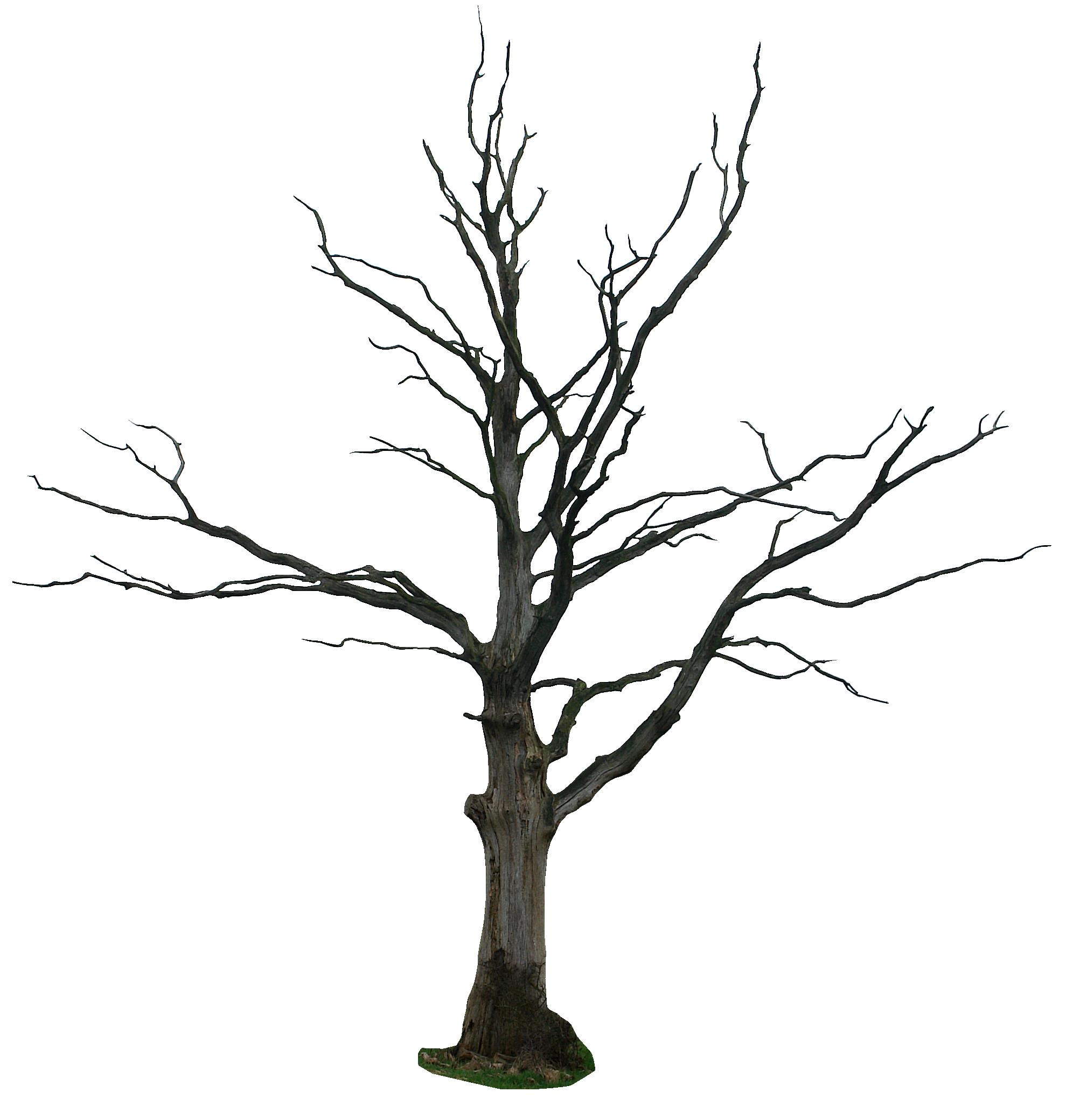 Dead Tree Cartoon Clipart
