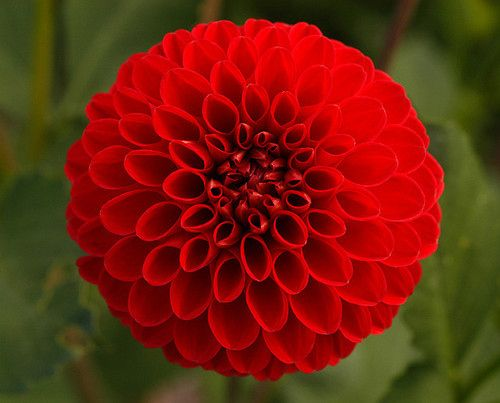 Beautiful flower nature plant red spectacular flowers and inspiring image beautiful flower nature plant red resolution find the image to your taste voltagebd Image collections