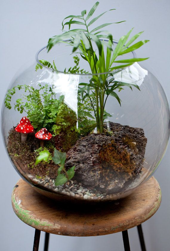 Terrarium Fish Bowl With Palm Fern Moss Red By Tinygreenworld