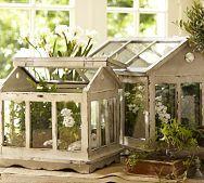 Terrariums-so cute