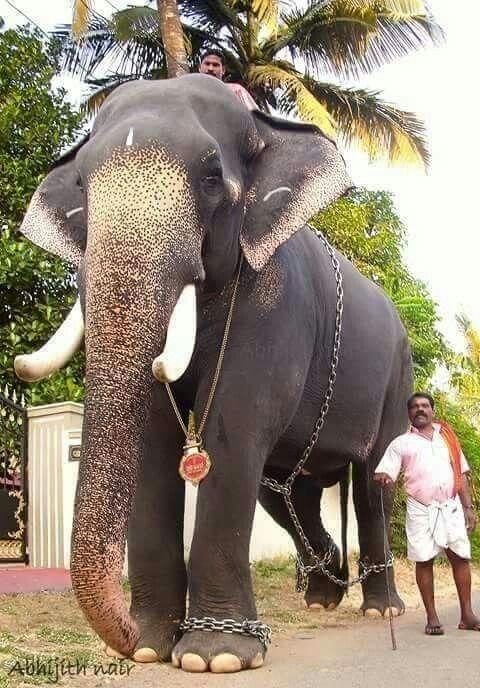 ganesh elephant tattoo