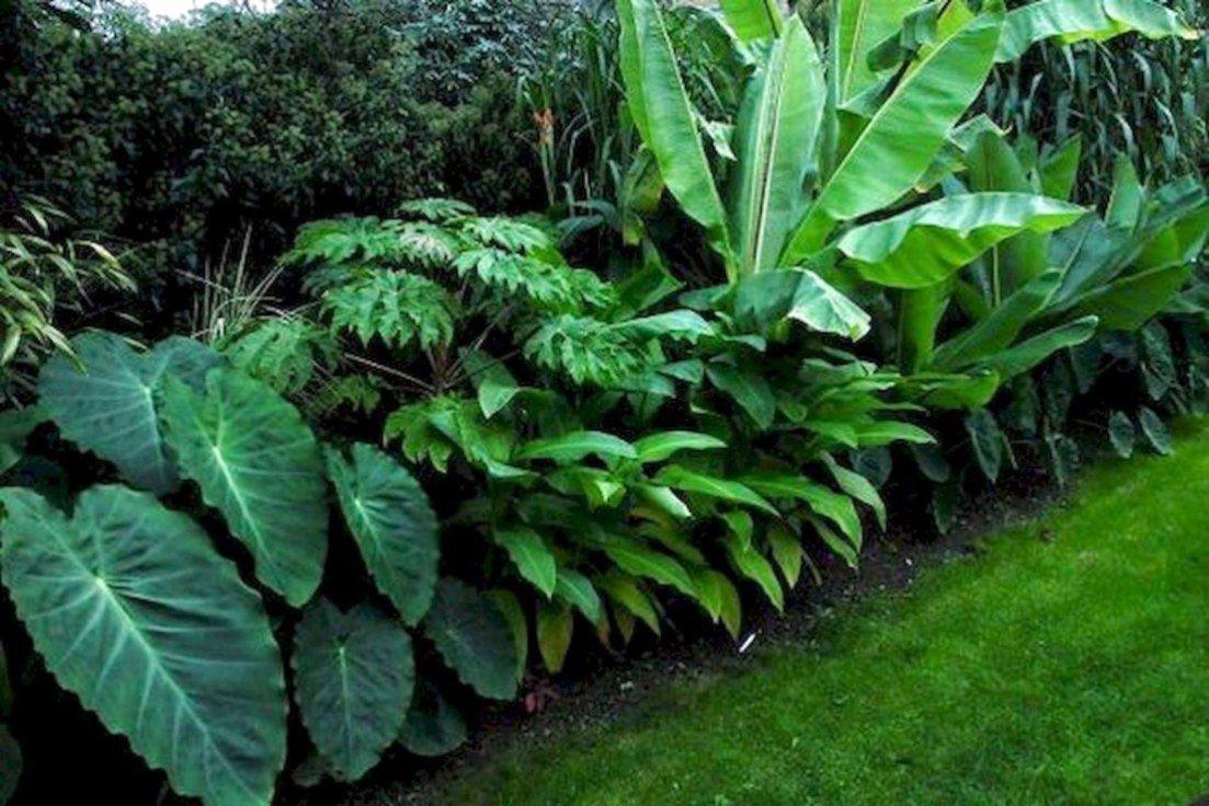 39 Best Tropical Garden Ideas (13) #tropischelandschaftsgestaltung
