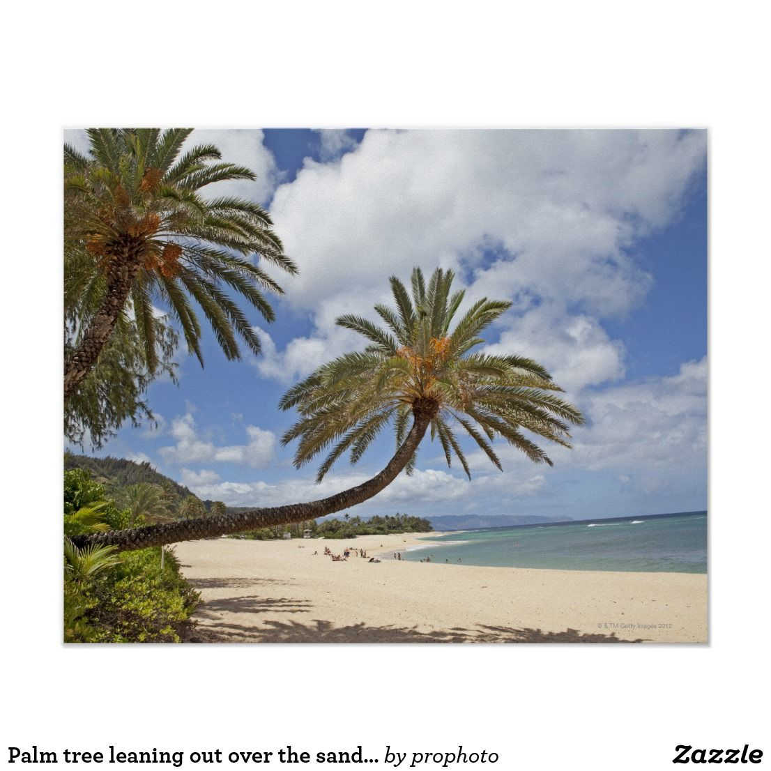 Palm tree leaning out over the sand at Sunset Poster