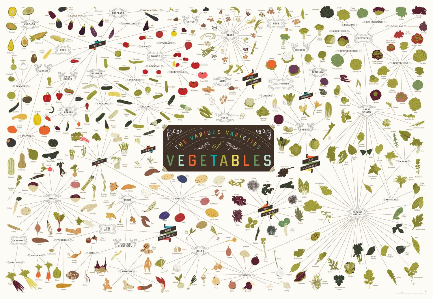The Various Varieties of Vegetables (Print) by Popchartlab on Etsy https://www.etsy.com/listing/126569068/the-various-varieties-of-vegetables