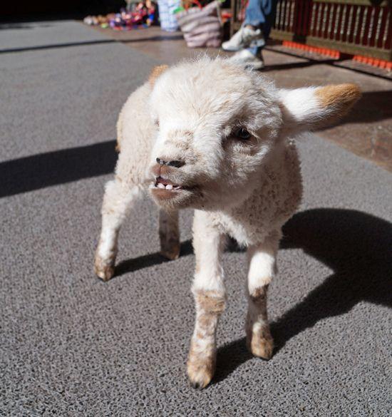 Travel Main Plaza Of Cusco Peru Cute Animals