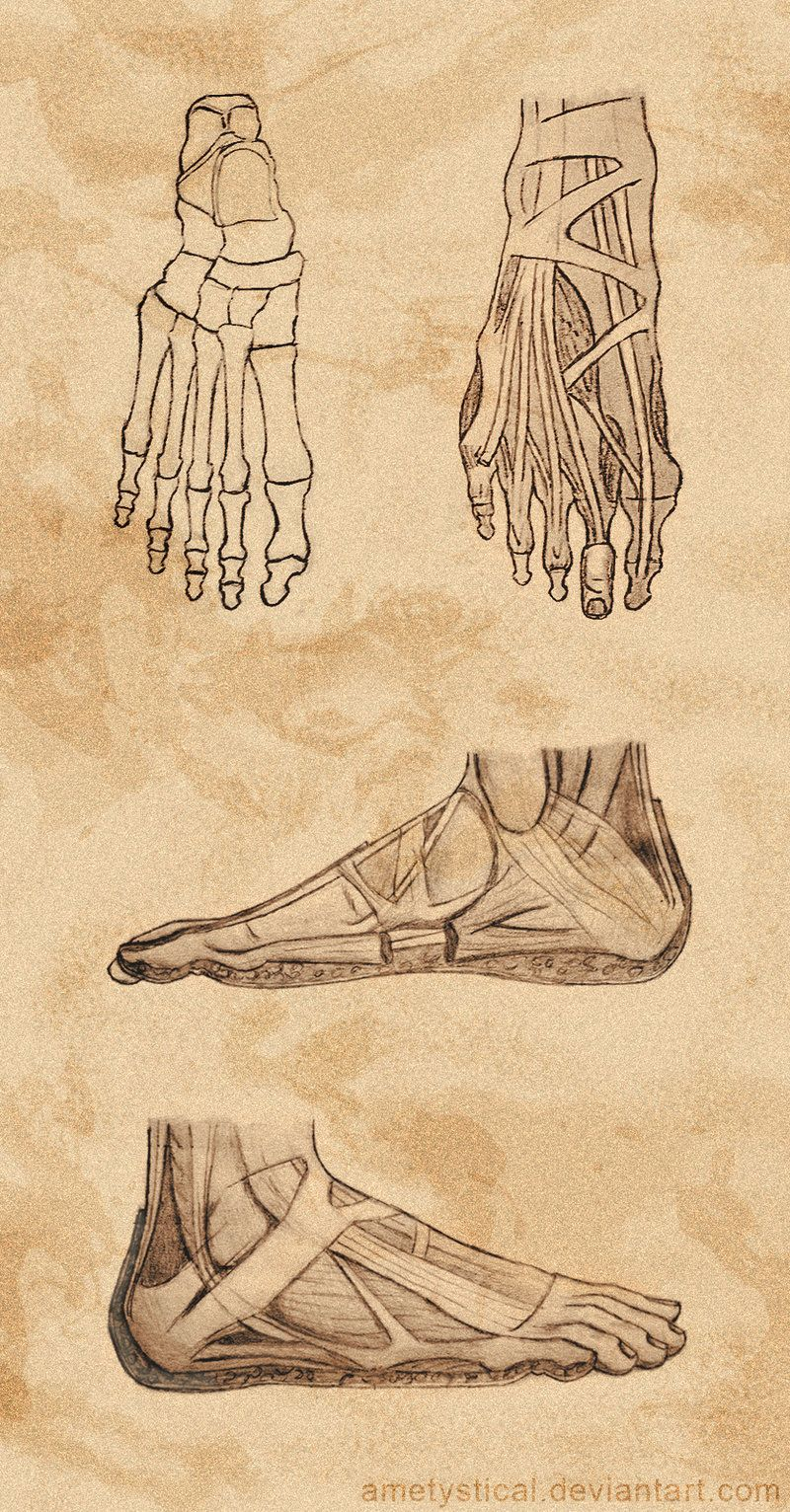 Right) Foot Study by Ametystical.deviantart.com on @DeviantArt ...