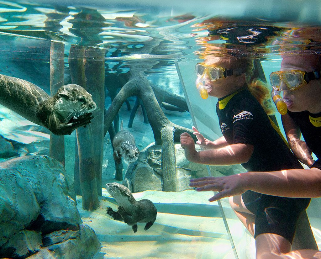 Discovery Cove Orlando Theme Park Had So Much Fun Here Definitely Think We Will