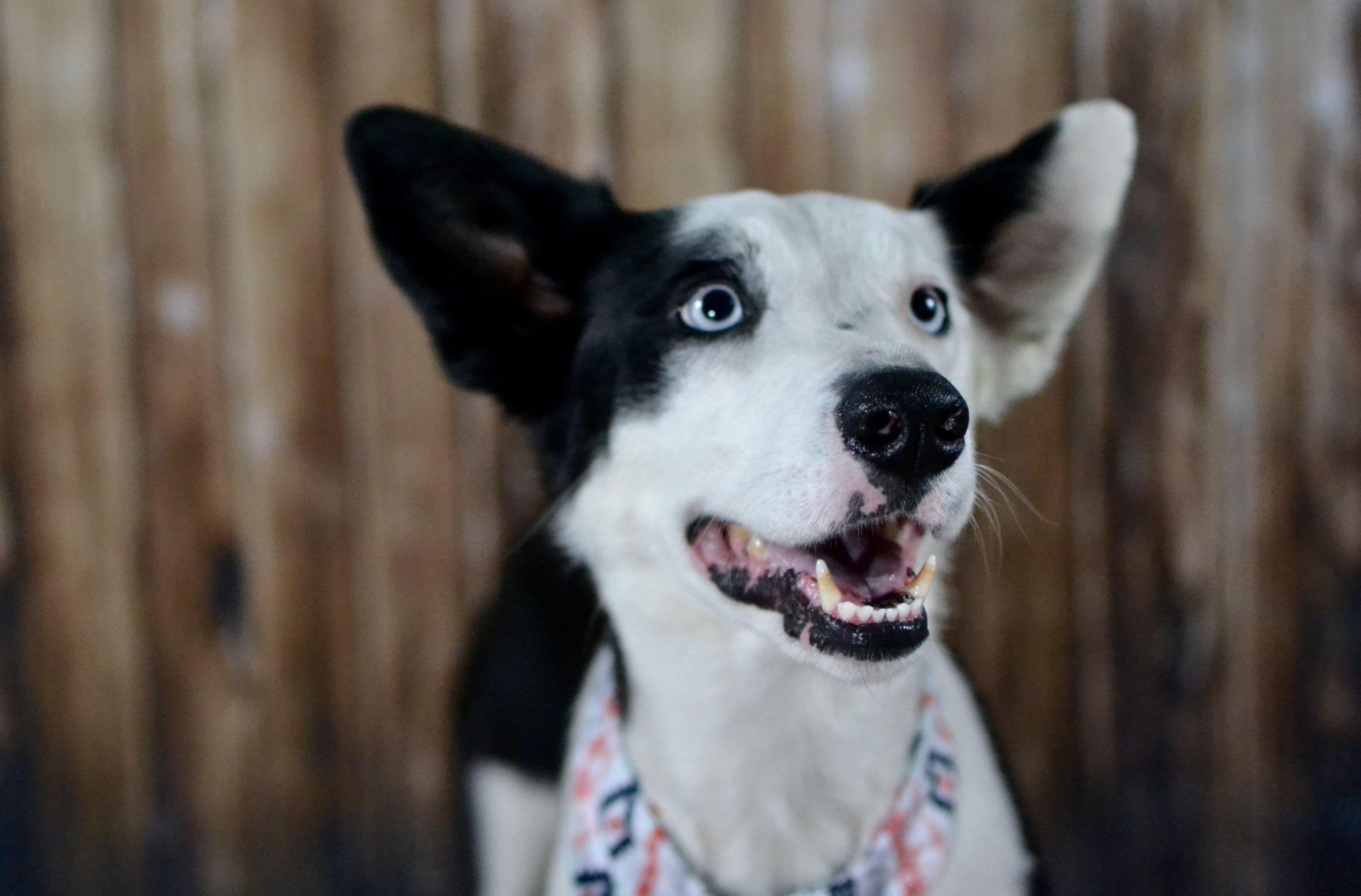 Park Art|My WordPress Blog_Border Collie Puppies For Adoption In Texas