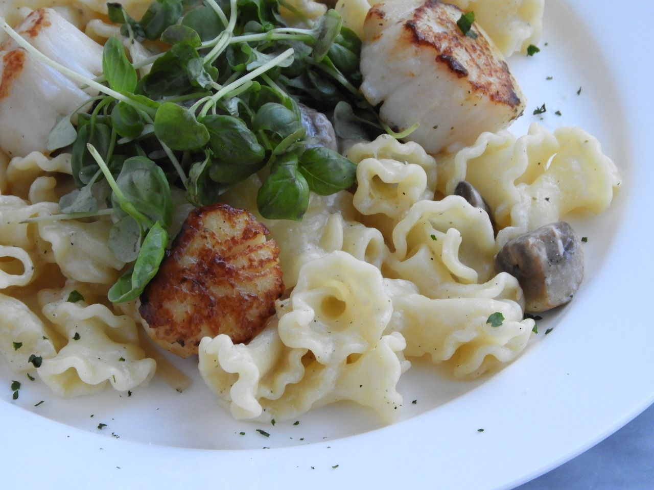 Organic Creamy Pasta Parmigiana With Wild Sea Scallops Recipe By