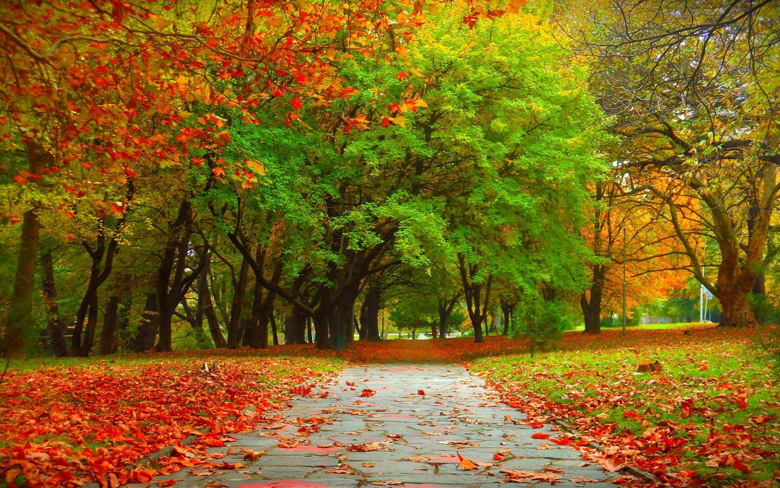 Autumn trees wallpaper | Nature | Pinterest | Autumn trees, Autumn ...