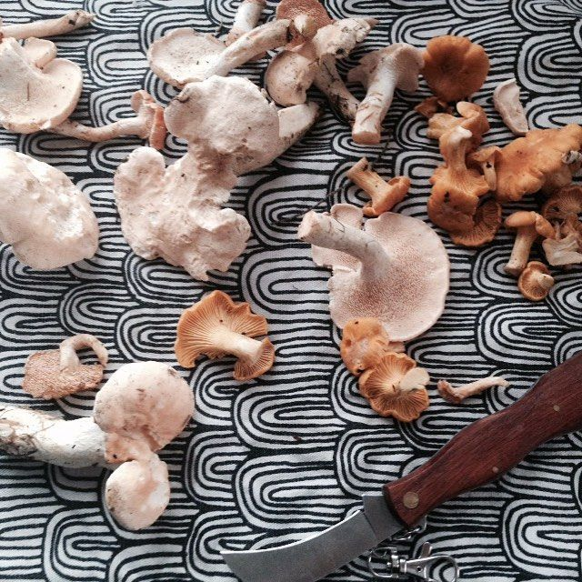 Tästä se lähtee!!! #sienihulluus