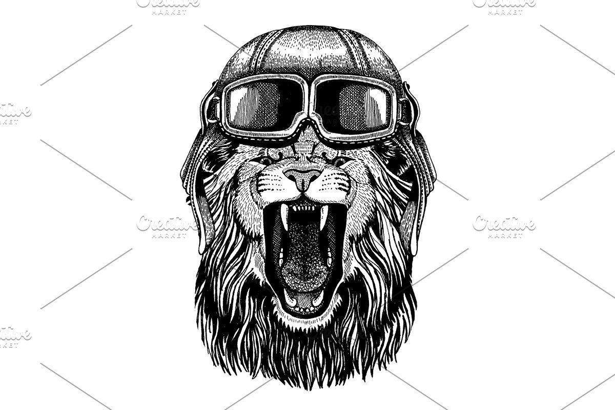 Lion. Animal with aviator helmet and in 2020 Lion images