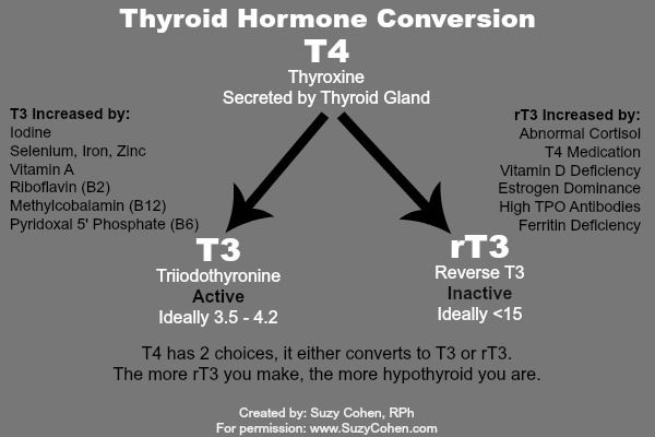 Which Is Better Synthroid Or Armour Thyroid Medication Thyroid Medication Thyroid Symptoms Thyroid Treatment