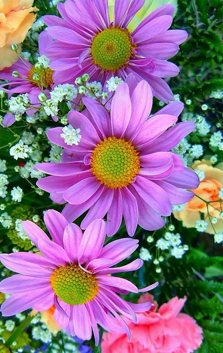 Summer flowers flori pinterest flowers flower and plants summer flowers izmirmasajfo
