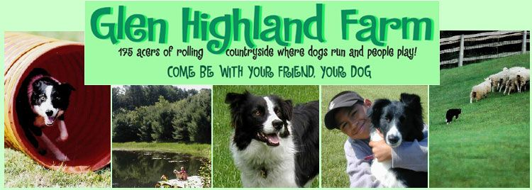Glen Highland Farm Sweet Border Collie Rescue Fabulous Place To