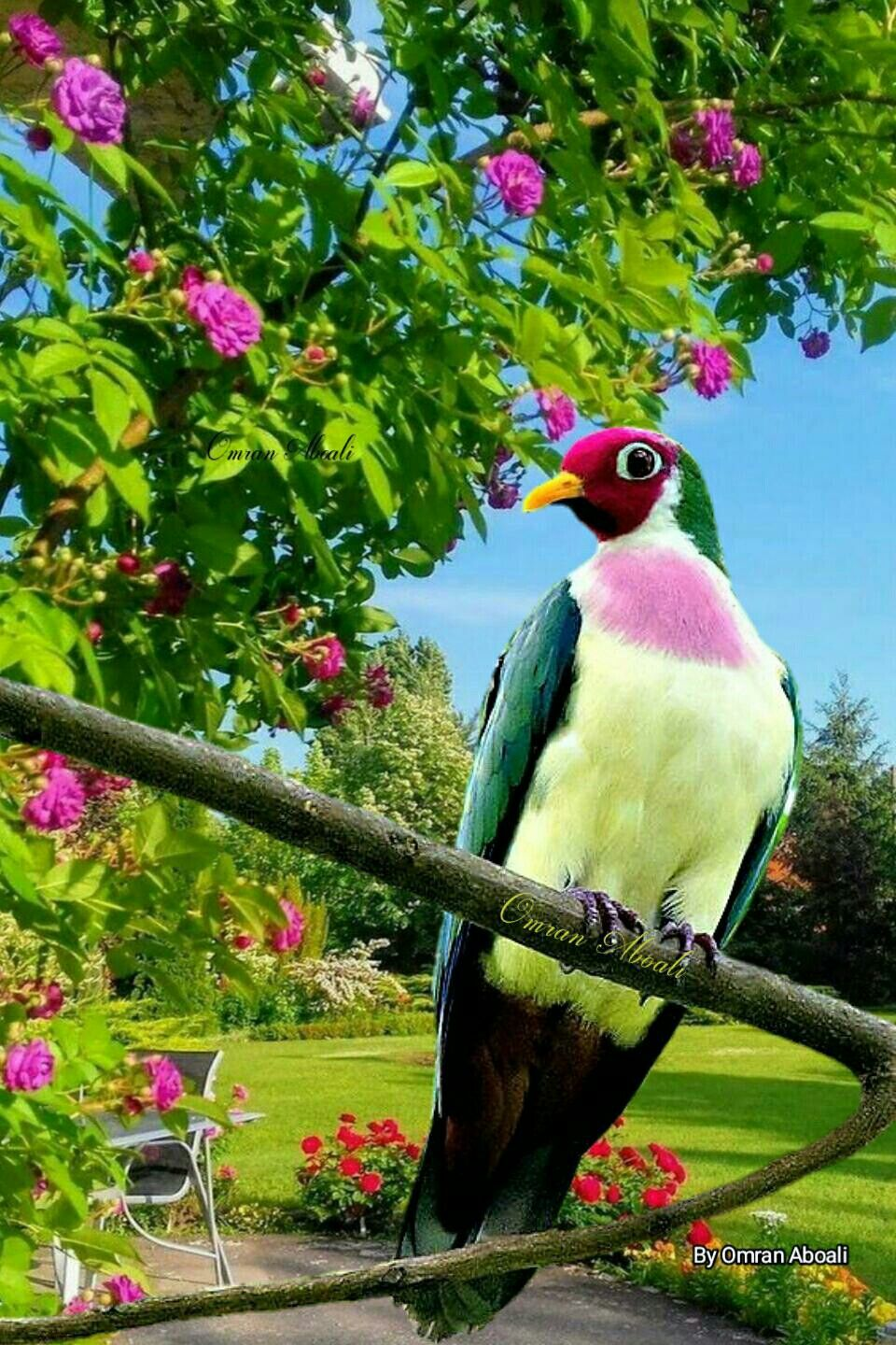 Pin by سهير 🍒 on طيور Pretty birds, Animals beautiful