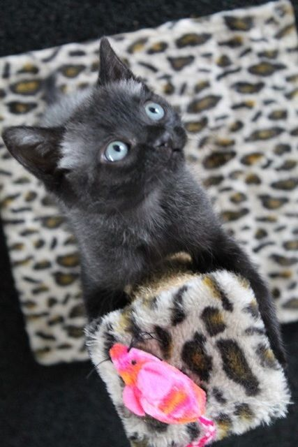 When His Owners Found Baby Bruce The Kitten He Was Just One Day Old And Teeny Tiny The Itsy Bitsy Kitty Was As Small And Newborn Kittens Kitten Little Kittens